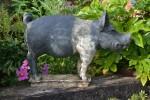 New pig 1
