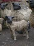Lamb and mumbig1