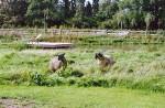 SHEEPVEIW104
