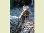 Chicken 03 05